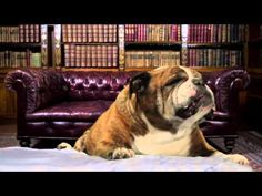 Buon Compleanno happy birthday dogs cani card - YouTube