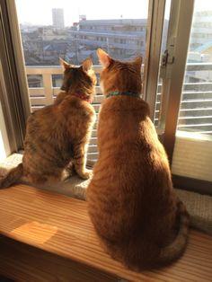 やっとお天気 - http://iyaiyahajimeru.jp/cat/archives/51464
