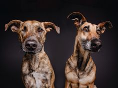 Two bubble heads by Elke Vogelsang on 500px