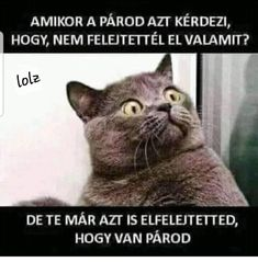 Funny pictures kid appropriate funny kid friendly cat memes kids funny pictures with captions kid friendly . Funny Shit, Funny Jokes To Tell, Funny Cat Memes, Funny Animals With Captions, Funny Pictures With Captions, Funny Photos, Hilarious Pictures, Memes Humor, Kid Memes