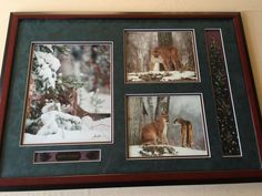 "Millcreek Wildlife Reflections ""Silent Stalker"" 3 Photos, Hand Signed, Framed"