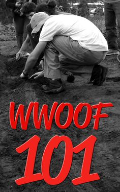 Check out my guide to WWOOFing:  WWOOF 101 - The lowdown on #WWOOFing for #volunteer #travel and #organic #farming