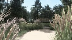 #gardenproject #conception #projektogrodu #gardenideas #decorativegrass #silvergrass #miscanthus #heathers #natural #naturalistic #greenplace #landscapedesign #greenspaces #architekturakrajobrazu #design #harmony #pracowniasttyk #sttyk #estetyka #joannapolewczak #nataliawankowicz #trawywogrodzie #trampoline Sidewalk, Plants, Projects, Side Walkway, Walkway, Plant, Walkways, Planets, Pavement