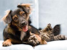 Convivência entre gatos e cachorros: dicas para apresentar os pets e ter um ambiente harmônico