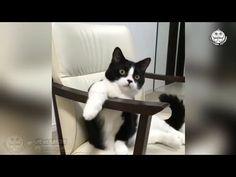Tingkah Kucing Bikin Cat Lovers Mabuk Gemes Part  Kompilasi Kucing Lucu You