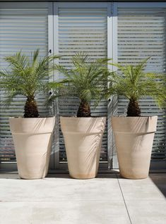 Exclusive to Garden life, hand thrown Morrocan Conical Planters. Pair with cacti and succulents, palms or more traditional shrubs and topiary ©Garden Life Topiary Garden, Garden Planters, Planter Pots, Cacti And Succulents, Cactus Plants, Natural Texture, Palms, Terracotta, Shrubs