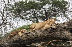 mom is watching by wasikandrew #animals #animal #pet #pets #animales #animallovers #photooftheday #amazing #picoftheday