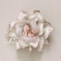 Digital backdrop Big Ivory flower nest - Free Photo Editing - Ideas of Free Photo Editing - - Digital backdrop Big Ivory flower nest Baby Hospital Pictures, Newborn Pictures, Baby Pictures, Baby Photos, Online Photo Editing, Image Editing, Nest Images, Newborn Posing, Digital Backdrops