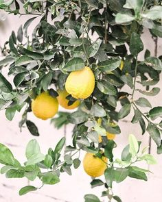 If after the #holidays you're looking for a little sunny #winter getaway, #Phoenix will be here, ready to welcome you with sun & citrus & pretty little street corners like this! Our neighbors have the biggest lemons growing on a tree in their yard & it spills over the wall and lights up our lives! If you walk near it, you can smell heaven. 🍋  Don't forget to head over to LoveandSpecs.com/Shop this week if you're looking for holiday gifting ideas - we have tons of ideas in a bunch of helpfu Arcadia Phoenix, Phoenix Arizona, Natural Home Decor, Cheap Travel, Us Travel, Cold Weather Outfits, Winter Travel, Best Places To Travel, Winter Vacations