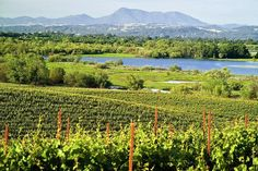 Sonoma County in Northern California has over 450 wineries. Here are the 11 best vineyards to visit.