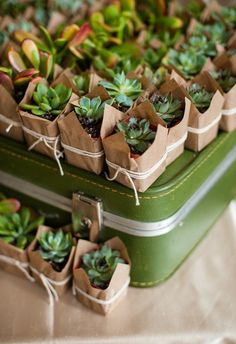 succulent wedding favors / http://www.himisspuff.com/succulent-wedding-decor-ideas/10/