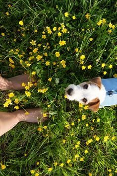 JRT puppy and dog mom on a field of flowers. Summer day dog photography, adventure dog, hiking with dog.