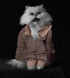 The Voice has major fashion statements picked up by multiple cast members. For example, Purrfect the Cat and Adam Levine rocking the grandpa sweater. #TheVoice