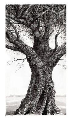 Pin by laurie vr on art in 2019 oak tree drawings, tree artwork, oak tree. Oak Tree Drawings, Tree Drawings Pencil, Tree Sketches, Drawing Sketches, Art Drawings, Drawing Trees, Pencil Art, Drawing Art, Painting Trees