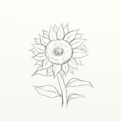 97 Best Drawing Sunflowers Images Sunflower Drawing Sunflowers