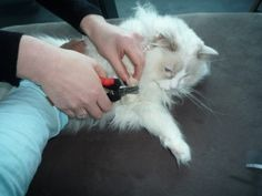 ways to trim kitty's nails #trimming_cat's_claws #grooming_your_cat