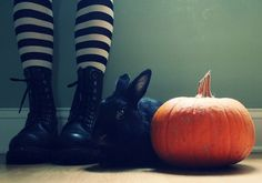 Love this image - reminds me of The Wizard of Oz although I don't remember pumpkins and rabbits though.