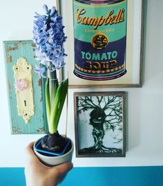 Home decor and hyacinthus