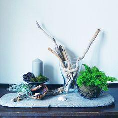 ジメジメ暗~い梅雨の季節には、室内でもその青々しさが楽しめる苔玉がオススメ。しかも自分好みに手作りできるんです。そんな苔玉の作り方から栽培方法、インテリア例まで、幅広く紹介します!