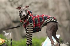 This Italian Greyhound sweater is hand-made product from Japan. One of the various designs. It is limited rompers because of scarce material. Hurry-up!! See the details and wonderful the design!