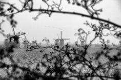 Kinderdijk VI by Watze D. de Haan