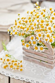 So pretty! Daisies are my favourite flowers 'cause they are so happy looking!