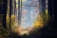 heavenly autumn 12
