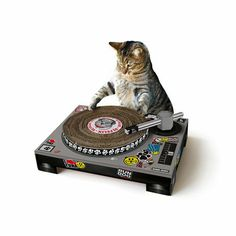 唱盤磨爪板創意十足,讓貓咪磨爪時猶如在捽碟!現於日本Amazon有售,每個售價$2,835日圓(約$213港元)!