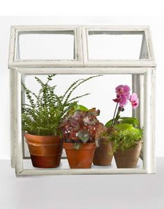 How to Make a Terrarium with picture frames.  Found this in Country Living, apparently created by The Upcycler,   theupcycler.com.    http://www.countryliving.com/crafts/projects/make-terrarium-0410#slide-1