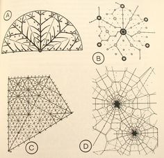 Transport networks for theoretical settlements (A) Kohl, 1850 (B) Christaller, 1933 (C) Losch, 1954 (D) Isard, 1960.