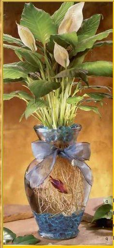 Beta fish plant  http://www.foundus.com/betta/betta.htm
