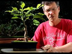 Lemon Tree Bonsai-Demonstration of how to prune and repot a bonsai tree.