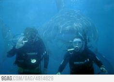 Photobomb Level: Shark
