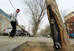 Spectacular Tree Hole Paintings Brighten Up Chinas Streets
