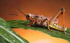 If Bugs Were Disguised As Protein Snack Bars Would You Eat Them (3)
