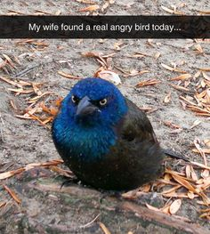 This Guy Is A Real Life Angry Bird. LOOK AT HOW CUTE AND ANGRY!!!