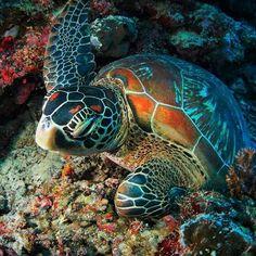 36 Wonderful Animal Pics That You Feel Full of Wonder - pokmnwasx Ocean Turtle, Turtle Love, Baby Sea Turtles, Cute Turtles, Sea Life Oberhausen, Beautiful Creatures, Animals Beautiful, Sea Turtle Pictures, Animals And Pets