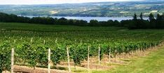 14+ years of 70+ Wineries on the Upstate NY Fingerlakes. At FingerlakesTransport.com We Can Find Your Favorite Wines 4U. Find US On TripAdvisor.