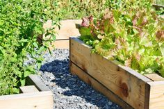 Odlingslåda DIY Plants, Garden