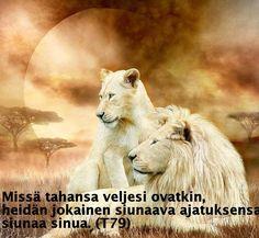 """Together"" - Two White Lions, Lion Couple ; Portrait Painting by ; Beautiful Cats, Animals Beautiful, Cute Animals, Wild Animals, Lion Couple, Lion And Lioness, Lion Love, Lion Pictures, Le Roi Lion"