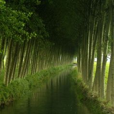 Tree-lined canal