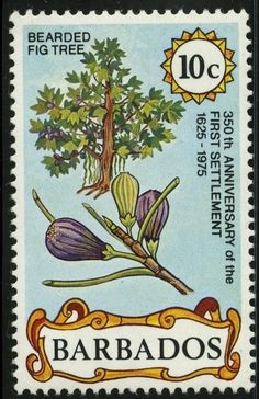 1975: Fig Tree and Fruit (ברבדוס) (First Settlement, 350th Anniversary) Mi:BB 400,Sn:BB 429,Yt:BB 406