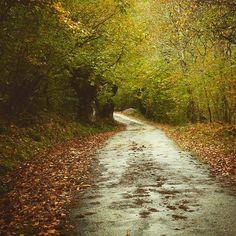 #carreteradeotoño de hoy #igasturias #asturias #asturiasparaisonatural #otoño