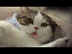 SUMPAH ini kucing lucu banget kelakuannya