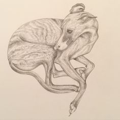 My drawing of Pegasus the whippet who lives in Hampstead London. This is pencil on smooth watercolour paper