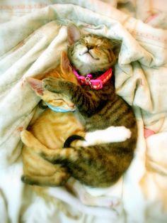 cute kitten hugging