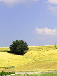 La campagna di Roggiano Gravina. [Foto a cura di Gianni Termine]