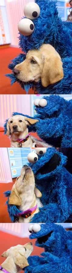 Dog Meets Cookie Monster                                                                                                                                                                                 More