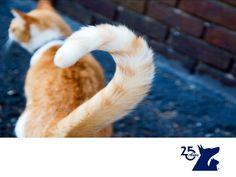 La cola de los gatos. LA MEJOR CLÍNICA VETERINARIA. La cola de los gatos es tan expresiva como la de los perros; sus diferentes posturas nos comunican su estado de ánimo. Si su cola está arriba quiere decir que se siente contento, si está entre las patas significa que tiene miedo, si mueve la cola muy rápido puede decir que está descontento. En Clínica Veterinaria del Bosque contamos con especialistas en etología para asesorarte acerca del comportamiento de tu mascota…