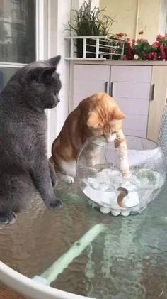 Funny Cute Cats, Cute Funny Animals, Funny Jump, Adorable Dogs, Cute Animal Videos, Funny Animal Pictures, Kittens Cutest, Cats And Kittens, Kittens Meowing
